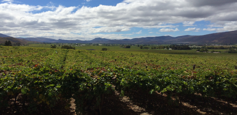 Thirsty grapes – water security and competing uses from a local perspective in South Africa