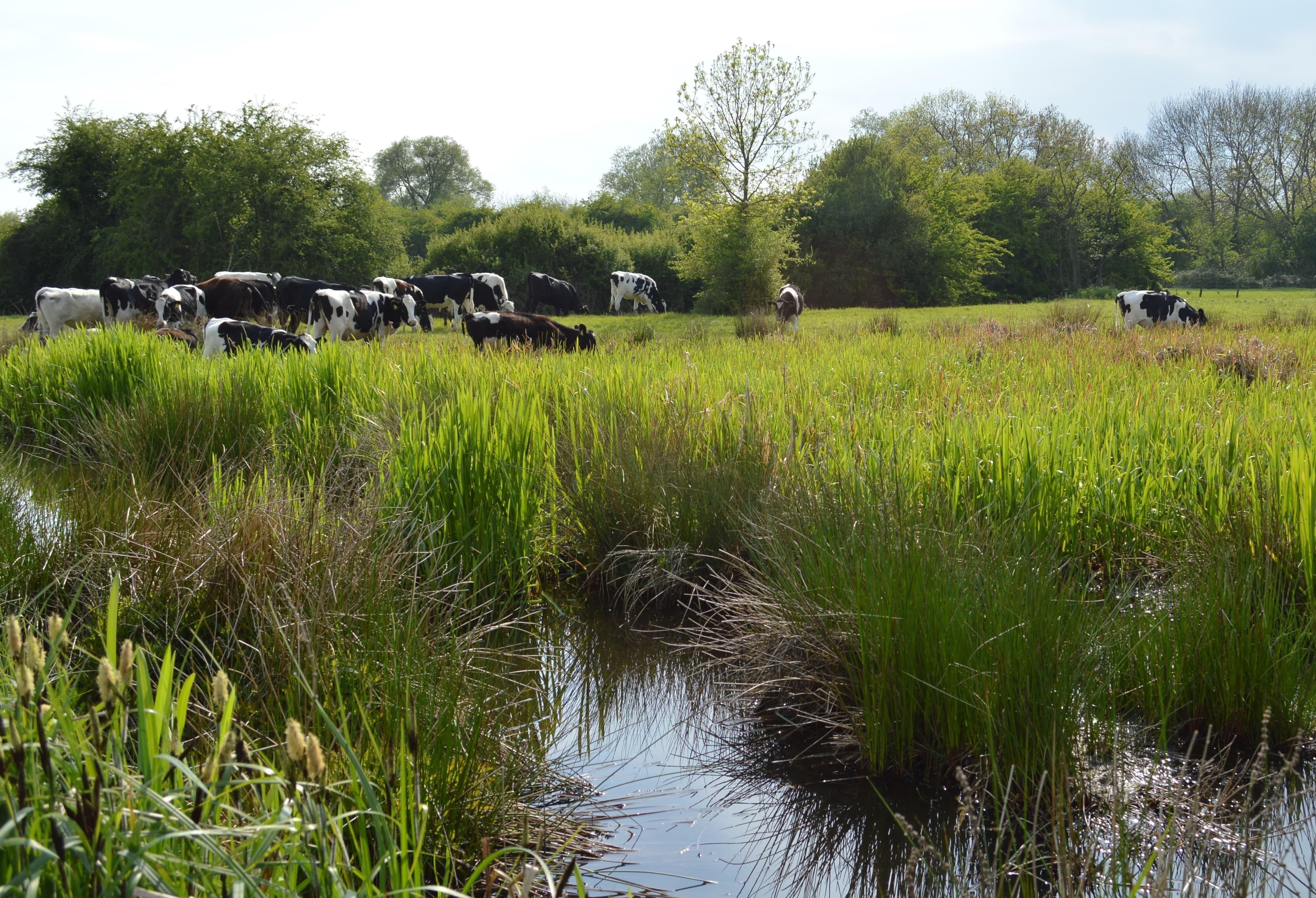Influencing the global wetlands agenda